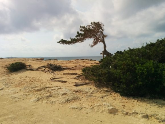 Ses-Salines-Ibiza_3